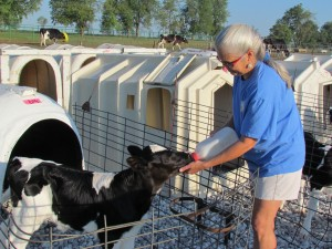 a photo of susan anglin, the dairy mom from spotted cow review, bottle feeding a calf
