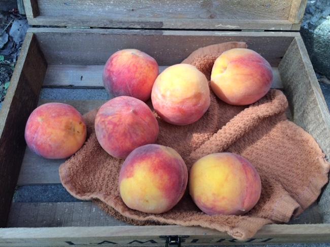 Fresh Arkansas peaches