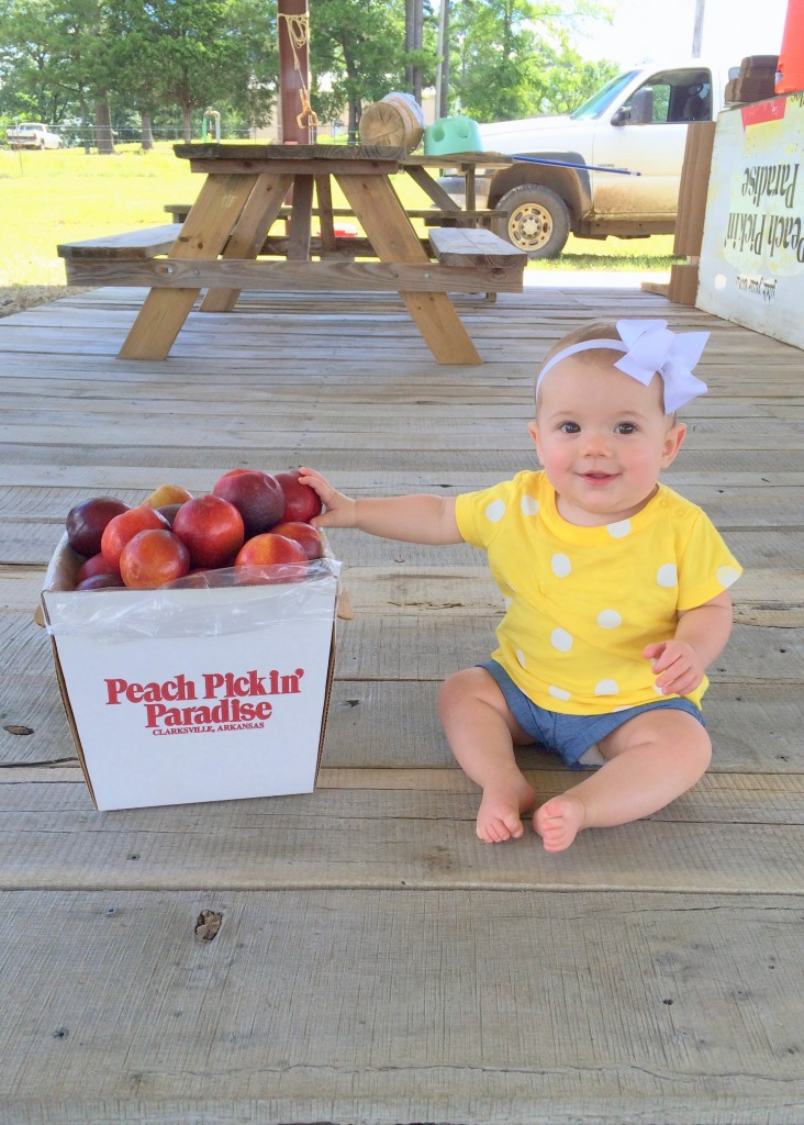 peach picking paradise baby kate used with permission for taste arkansas