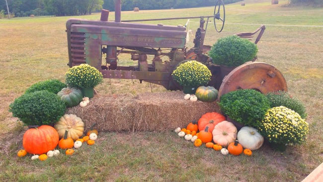 roseberry farms hay bale pumpkins tractor